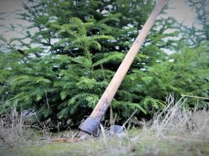 Tăieri ilegale de pădure
