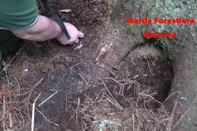Dosar penal pentru tăierea ilegală de arbori în Câmpulung Moldovenesc