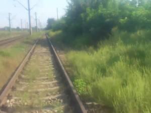 Ambrozie la marginea căii ferate, în apropiere de stația CFR Liteni
