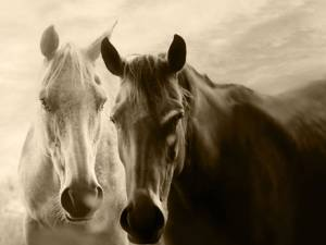 """""""Caii ghidrani de la Rădăuţi"""""""