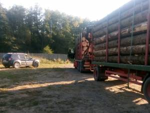 Transporturi de masă lemnoasă, pe aceleași acte, la Boroaia