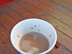 Cafeaua în care se aflau mai multe insecte