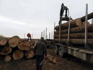 Transporturi ilegale de masă lemnoasă, surprinse de Garda Forestieră Suceava