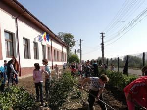 Peste 200 participanți au reușit să planteze 1000 de puieți de arbuști decorativi, la Preutești