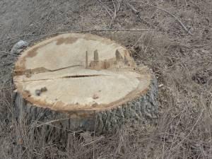 S-a ales cu lemnul confiscat pentru că nu avea documente pentru marfa transportată