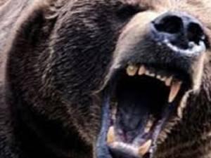 Bătrânul a fost sfâşiat de un urs FOTO sunphoto.ro