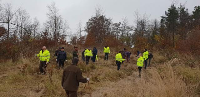 100 de puieți de paltin de munte, plantați de angajații Comisariatului Județean Suceava al Gărzii Naționale de Mediu și cei ai Ocolului Silvic Pătrăuți