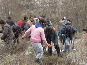 La Fălticeni s-au plantat aproape 9.000 de puieţi de salcâm pentru stabilizarea unor terenuri degradate