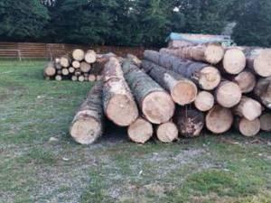 Întreaga cantitate de 17,94 metri cubi de lemn, în valoare de 5.500 de lei, a fost confiscată