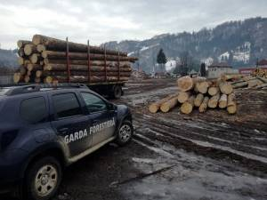 Sancțiuni de peste 80.000 de lei, aplicate de Garda Forestieră Suceava, pentru infracțiuni silvice