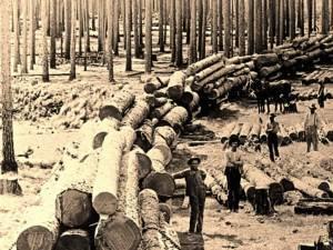"""""""Realizări ale forestierilor"""""""