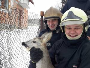 Caprioara a fost salvata de pompieri si eliberata apoi in padure