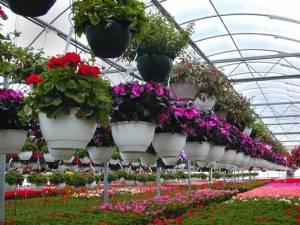 Primăria Suceava vrea să facă o seră de flori modernă