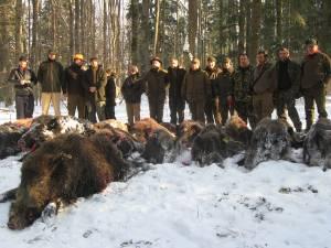800 de mistreți au fost vânați anul trecut în fondurile cinegetice din județul Suceava