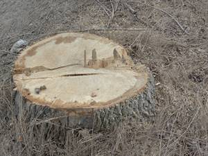 Amenzi de aproape 60.000 de lei şi peste 120 mc de lemn confiscaţi, pentru nereguli la regimul silvic