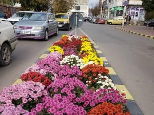 Noua seră care va furniza florile pentru înfrumusețarea străzilor Sucevei va fi construită în 12 luni