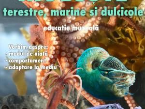 Ora de muzeu Moluște - marine, terestre și dulcicole, din România și străinătate