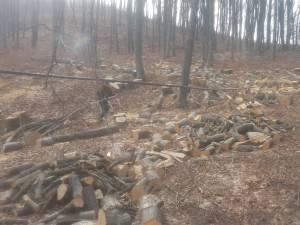 După depistarea unor tăieri ilegale de arbori la Udești, hoții de lemne s-au întors imediat în pădure și au continuat