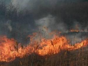 Două incendii de vegetaţie s-au extins pe aproape 25 de hectare, punând în pericol pădurea