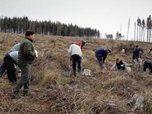 Acțiuni de împădurire la Ocoalele Silvice Pătrăuți și Dolhasca, în prima zi din Luna Plantării Arborilor