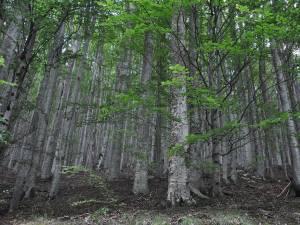 Ziua Internațională a Pădurilor este sărbătorită în Luna Plantării Arborilor