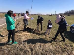 Peste 100 de cireşi au fost plantați pe marginea drumului naţional 2H, care merge de la Vicov spre Putna