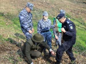 Silvicultorii suceveni, cu ajutorul a aproximativ 150 de voluntari, au plantat 2.300 de stejari, paltini, frasini și cireși