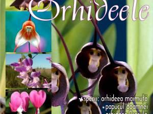 """Lecţia """"Orhideele"""", Muzeul de Științe ale Naturii din Suceava"""