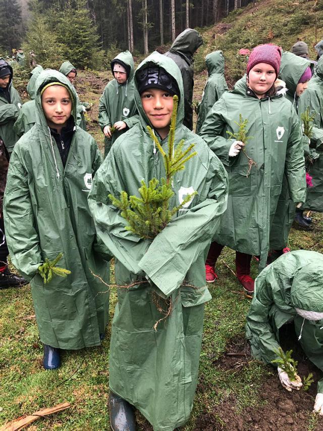 1.200 puieți de molid, brad și larice, plantați de elevii din Stulpicani,  Gemenea și Ostra