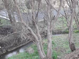 Apele pârâului Şcheia emană mirosuri greu suportabile