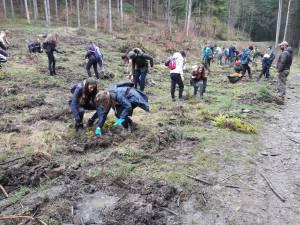 6.700 de puieți au fost plantați pe o suprafață de 1,5 ha