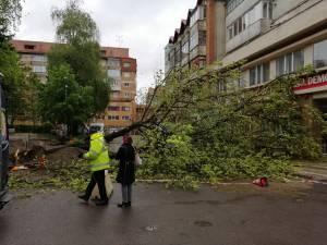 Un copac a căzut pe stradă în centrul Sucevei