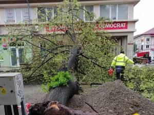 Din fericire, copacul nu a lovit nici oameni și nici mașini