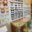"""Expoziția temporară """"Curcubee înaripate"""", vernisată, miercuri, la Muzeul de Ştiinţele Naturii"""