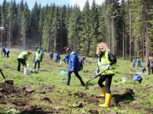 Vedeta TV Carmen Brumă, alături de voluntari, la acțiunea de plantare de la Dorna Candrenilor