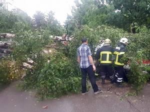 Un copac doborât de furtună a căzut pe o stradă din Siret
