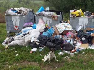 La Hreaţca – Vultureşti, pubelele amplasate de firma care se ocupă cu colectarea deşeurilor au dat pur şi simplu pe afară