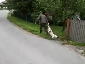 Câinele, târât după ce a fost împuşcat