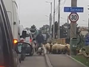Turma oi pe podul de la Ițcani