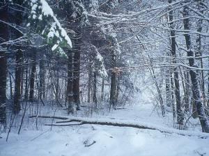 """""""Ninge în toată ţara"""""""