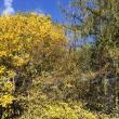 Organizaţiile de mediu şi persoanele interesate de tăierile neautorizate, invitate să participe la verificările în teren la fondul forestier