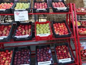 Zece producători au prezentat soiuri de mere cunoscute