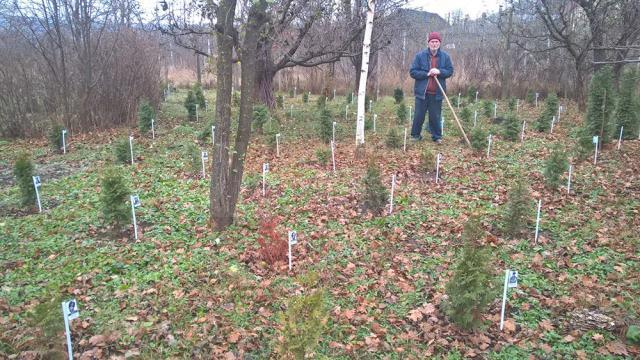 Un octogenar a plantat şi îngrijit peste o sută de tuia, fiecare dedicat unei personalităţi a neamului