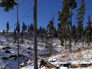 Peste 500 de cioate de arbori tăiați ilegal, descoperite pe raza Ocolului Silvic Cârlibaba