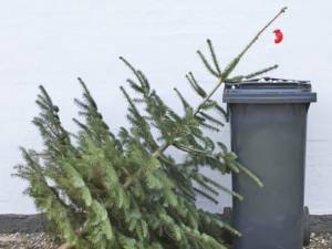 Brazii aruncaţi lângă punctele de colectare a deșeurilor sunt ridicați gratuit, în aceasta perioadă