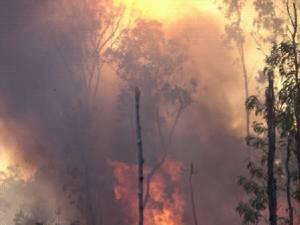"""""""Foc de pădure"""""""