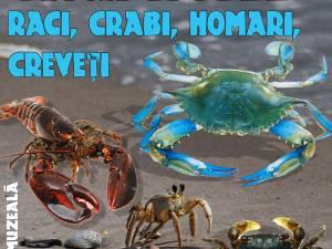 """Lecția muzeală intitulată """"Crustacee - raci, crabi, homari, creveți"""", organizată la Sala de Conferințe a Muzeului de Istorie Suceava"""
