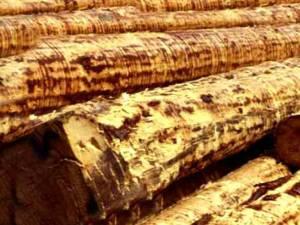 Capitala lemnarilor...