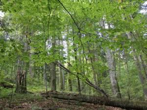 Prin recoltarea lemnului se asigură securitatea sanitară a pădurilor, regenerarea acestora, finanțarea pazei și a administrării pădurilor