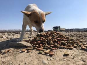 O asociație strânge fonduri pentru a hrăni câinii rămași singuri pe străzile Sucevei